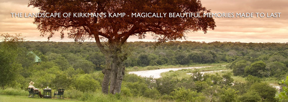 Corporate to Kamp: Extending a Business Trip for a Safari of a Lifetime