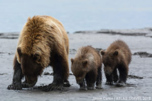 Travel Alaska - Grizzly Bear Family